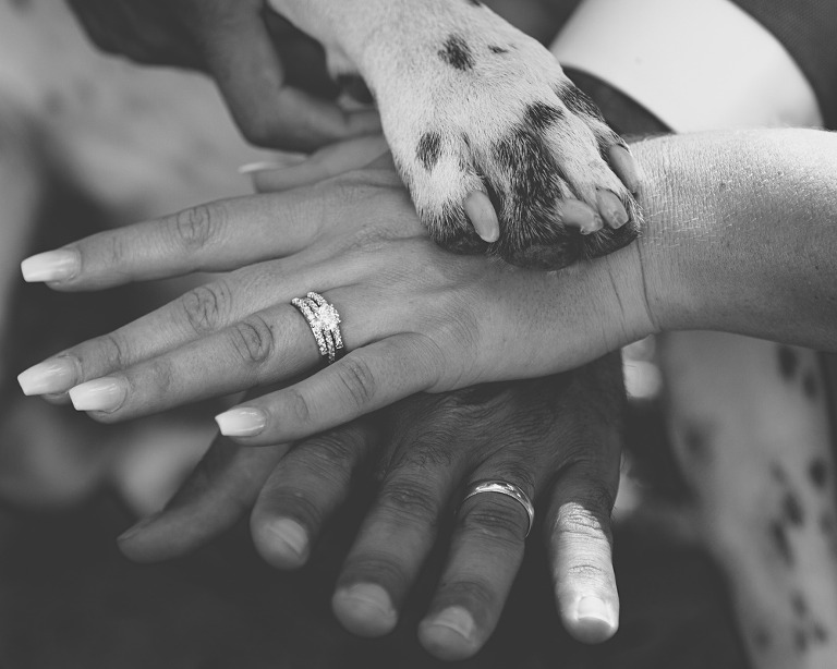 wedding ring shot with dog paw, Jerome & Michelle married at McInosh barn in Ellensburg photographed by Hailey Haberman Ellensburg Wedding Photographer